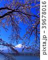河口湖から青空に咲く桜と富士山 2018/04/10 39678016