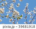 桜と青空 39681918