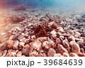 Starfish on the stony bottom 39684639