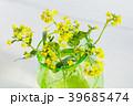 ナノハナ(コマツナ) 39685474