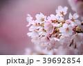 桜 さくら 花の写真 39692854