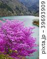 春 湖 奥多摩湖の写真 39693909