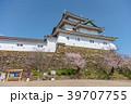 和歌山城 桜 春の写真 39707755