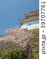 和歌山城 桜 春の写真 39707761