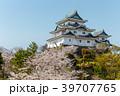 和歌山城 桜 春の写真 39707765