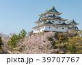 和歌山城 桜 春の写真 39707767