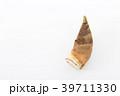 野菜 筍 竹の子の写真 39711330