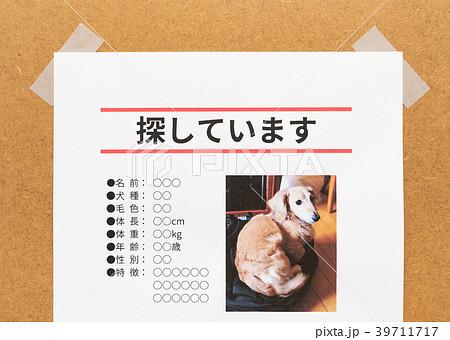 行方不明 ペット 貼り紙 張り紙 犬 ペットロス 掲示板 39711717