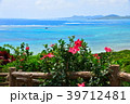 ハイビスカス 花 南の島の写真 39712481