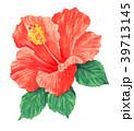hibiscus18413pix7 39713145