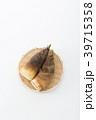 野菜 筍 竹の子の写真 39715358