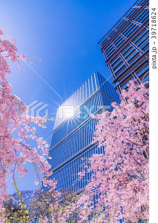 日本の春 紀尾井町ガーデンテラスの桜 39718624