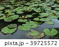 蓮 葉 植物の写真 39725572