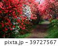 赤い花 39727567