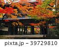 永源寺 山門 紅葉の写真 39729810