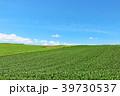 青空 夏 美瑛の写真 39730537
