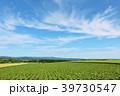 青空 夏 北海道の写真 39730547
