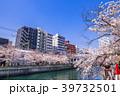横浜 大岡川 桜の写真 39732501