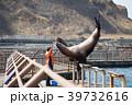 おたる水族館 トドショー 39732616