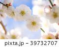 花 春 植物の写真 39732707