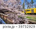 石神井川 桜 桜並木の写真 39732929
