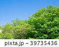 春 葉 雲の写真 39735436