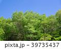 春 葉 雲の写真 39735437