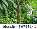 観葉植物 植物 自然の写真 39738141