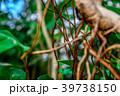 観葉植物 植物 自然の写真 39738150