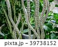 観葉植物 植物 自然の写真 39738152