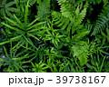 観葉植物 植物 葉の写真 39738167