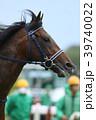 馬 競馬 競走馬の写真 39740022