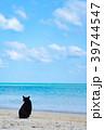 コンドイ浜の猫 39744547