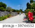 竹富島 ハイビスカス 花の写真 39744552