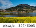 菜の花 桜 上堰潟公園の写真 39746003