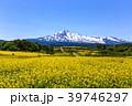 鳥海山と菜の花畑 39746297