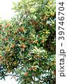 トベラ 果実 実の写真 39746704
