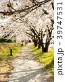 Cherry blossom park and road. Riding bicycle  39747531