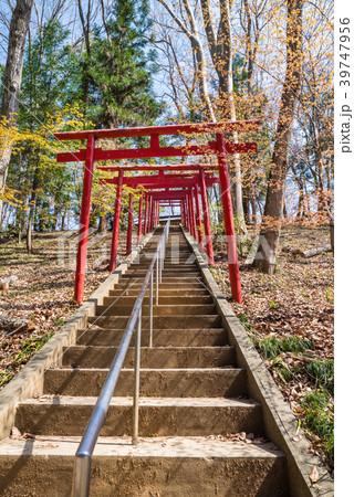埼玉県秩父市 葛葉稲荷神社の鳥居と階段 39747956