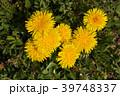 花 春 植物の写真 39748337