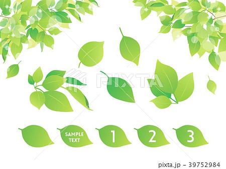 背景素材 植物 39752984