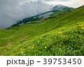飯豊本山付近のニッコウキスゲと雲湧く大日岳 39753450
