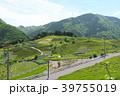上ヶ流 茶畑 天空の茶畑の写真 39755019