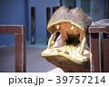 和歌山県南紀白浜のアドベンチャーワールドのカバ(餌やり) 39757214