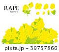 菜の花 39757866
