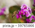 ミツバチ 蜂 ハーデンベルギアの写真 39765866