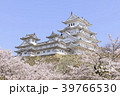 姫路城・春・満開の桜 39766530