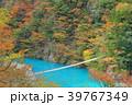 寸又峡 夢の吊り橋 紅葉の写真 39767349