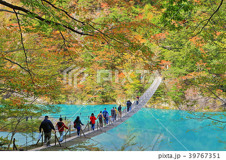 紅葉の寸又峡夢の吊り橋 39767351
