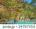 寸又峡 夢の吊り橋 紅葉の写真 39767354